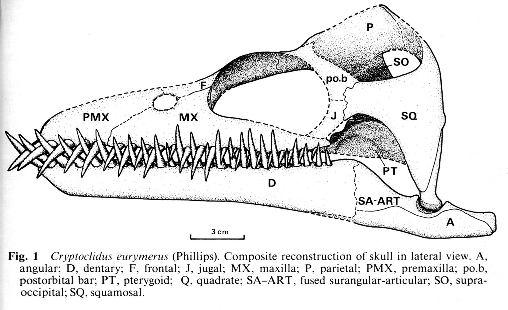 Cryptoclidus Plesiosaur Directory