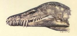 Hydrotherosaurus head painting by Zdenek Burian.
