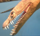 Head of a Meyerasaurus model in the SMNS.