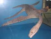 Meyerasaurus model in the SMNS.
