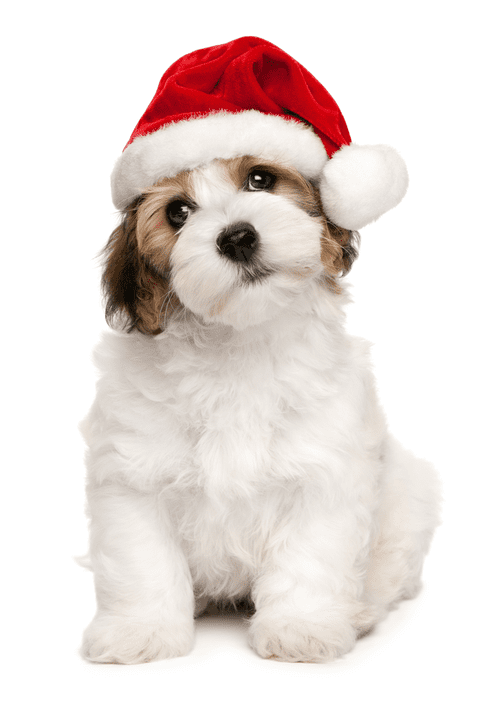 Holiday Decoration Safety Tips For Pets