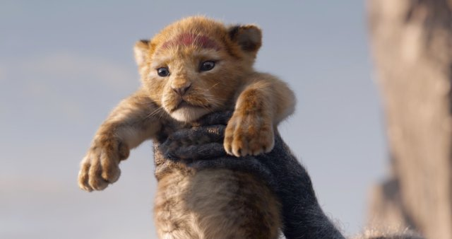 Simba (voz de Donald Glover) en The Lion King (2019). Imagen: The Lion King Twitter (@disneylionking).