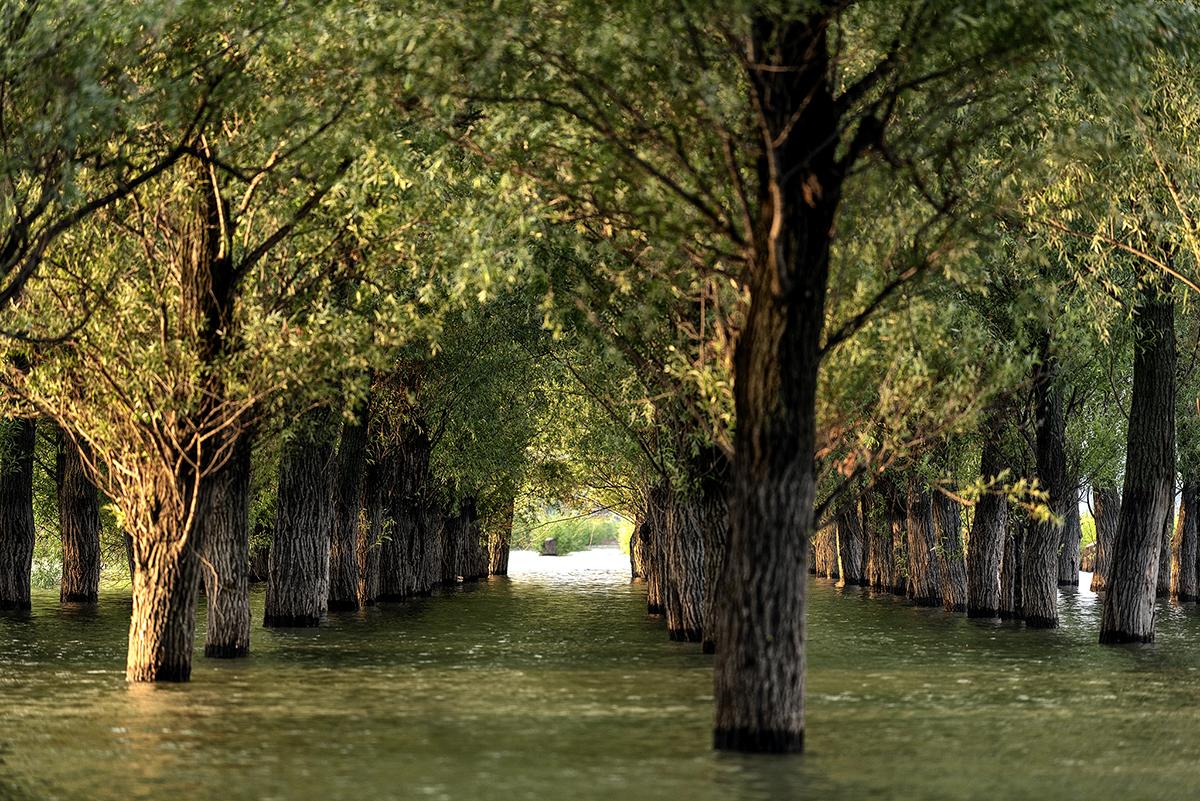 copacii de langa sosea