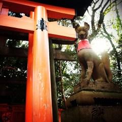 Senbon Torii - Fox Statue - Kyoto Japan