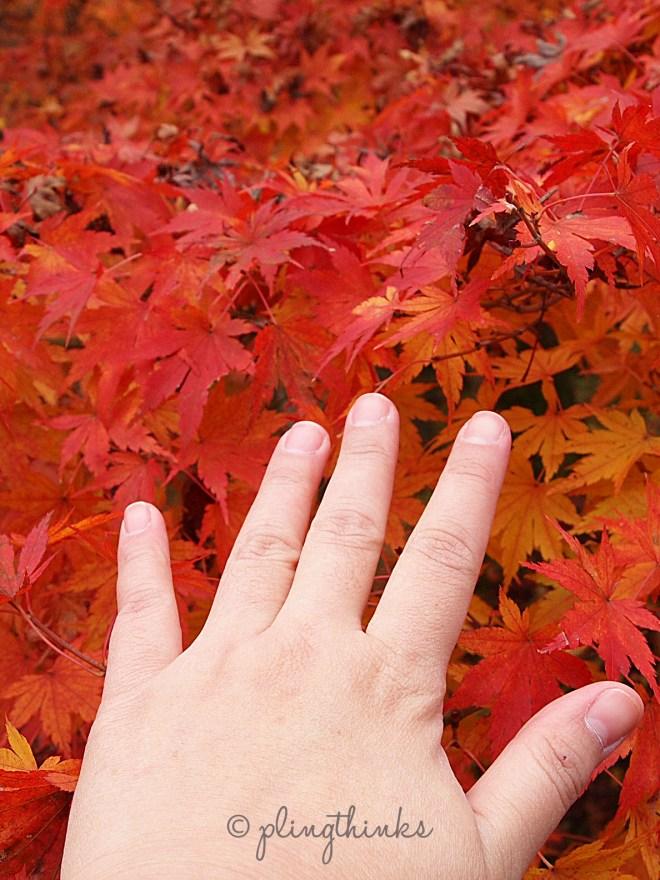 Hand on Maple Leaves - Tofukuji Kyoto