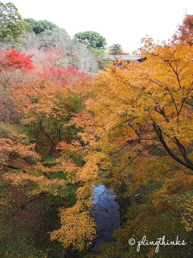 Maple Leaves Trees - Tofuku-ji Kyoto Japan