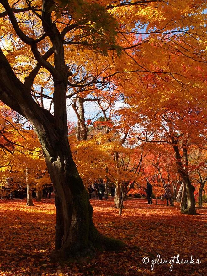 Tofuku-ji Autumn Colours - Maple Trees Kyoto