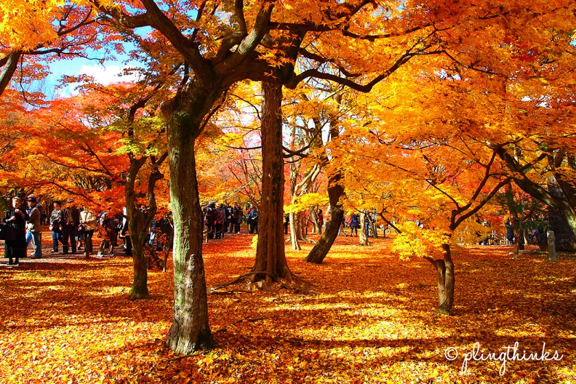 Tofukuji Temple Must-See - Autumn Colors Kyoto