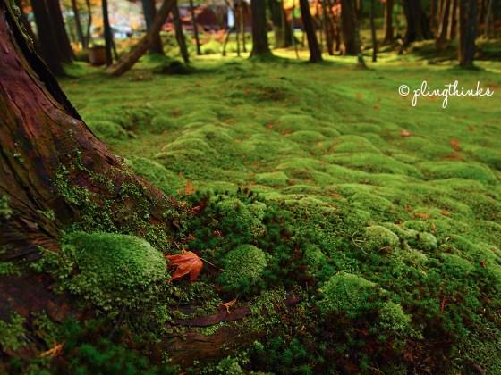 Japanese Maple Leaf - Moss Garden Kyoto