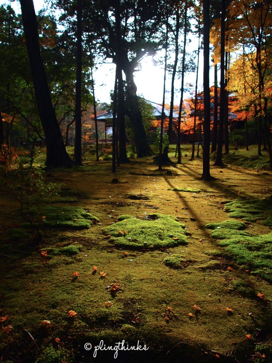 Light Shadow Trees in Moss Garden - Kokedera Kyoto