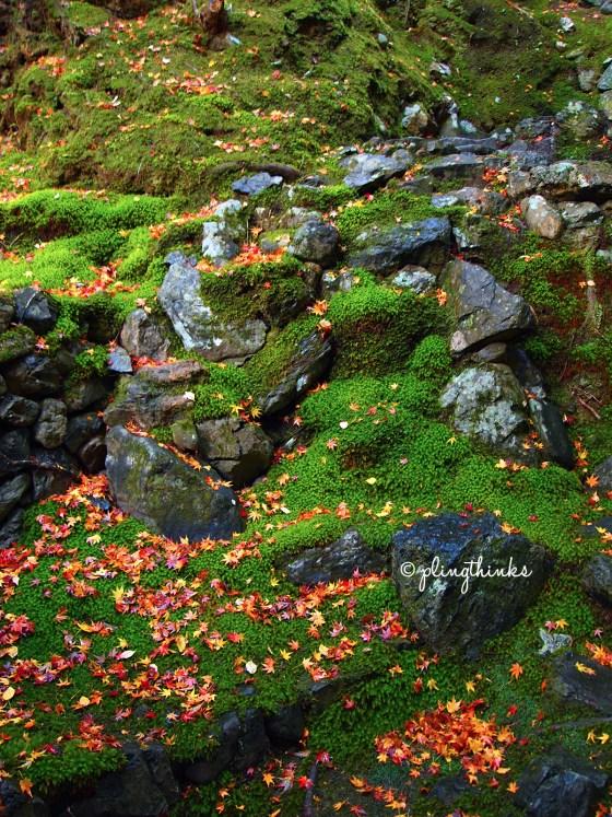 Moss Rocks Maple Leaves - Saihoji Kokedera Kyoto