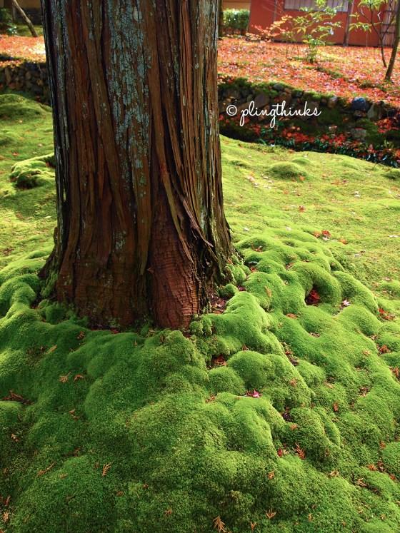 Moss under Tree in Autumn - Saihoji Kokedera Kyoto
