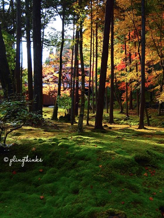 Sunset Moss Garden Saihoji - Kyoto Kokedera