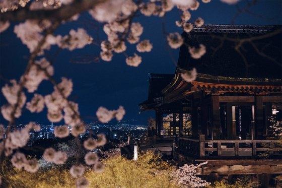 Nighttime Illumination Spring Cherry Blossom - Kiyomizu Kyoto