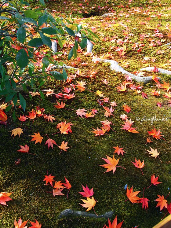 Japanese Maple Leaves on Mossy Ground at Kinkaku-ji