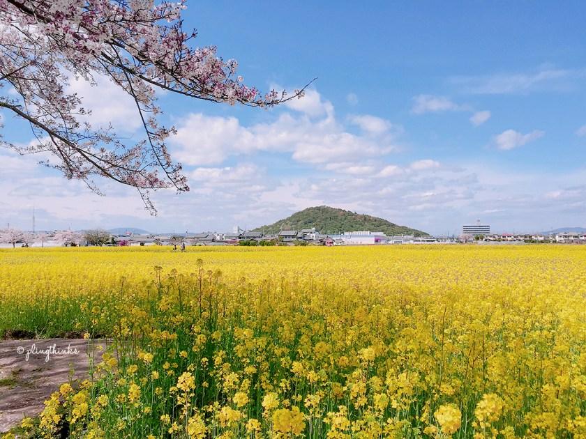 Fujiwara Palace Ruins Nara - Mountains Cherry Blossoms Rapeseed Flowers