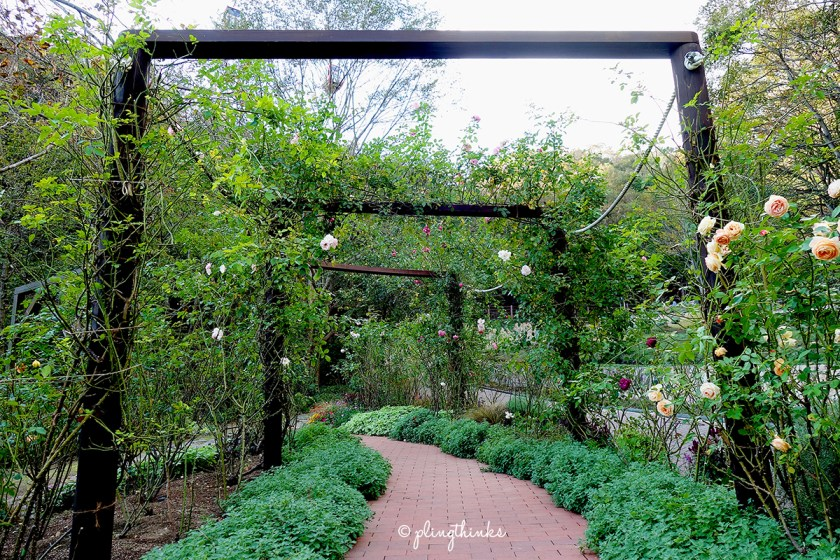 Rose path - Kobe Nunobiki Herb Gardens