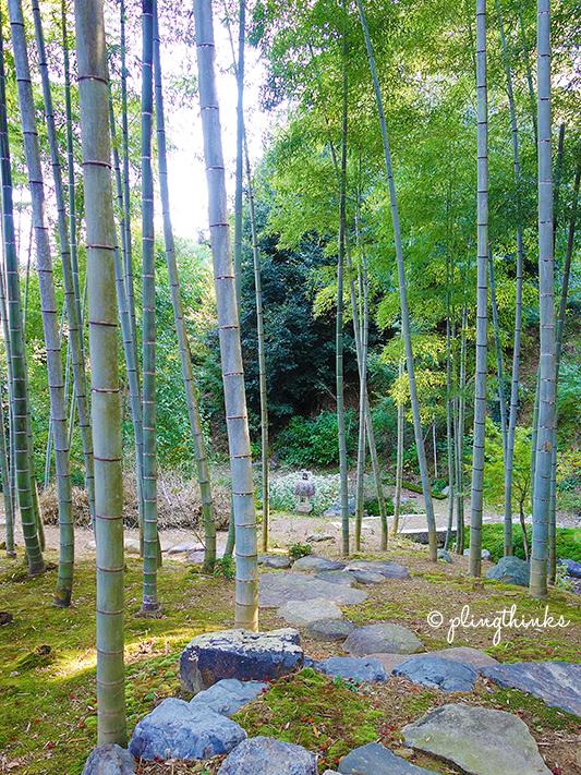 Bamboo in Jojakkoji - Kyoto Arashiyama