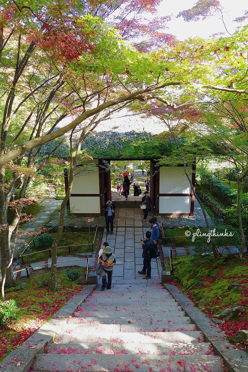 Jojakkoji Kyoto Arashiyama Autumn - Moss Covered Roof