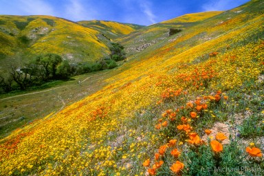 Wildflowers in Gorman, CA