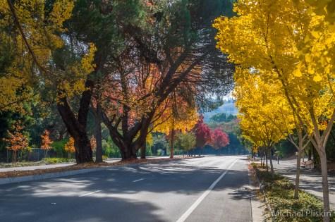 Fall Foliage in Walnut Creek, CA
