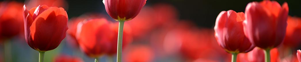 red flower banner