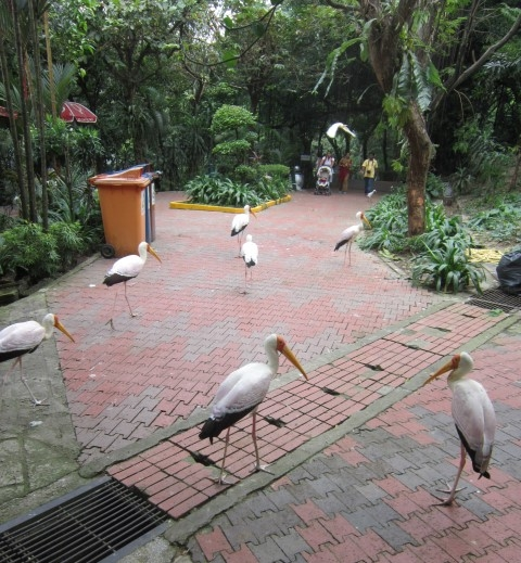 10-kl-bird-park-1