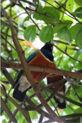10-kl-bird-park-2
