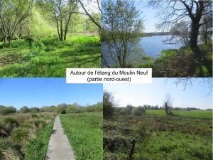Zones Humides autour de l'étang de Moulin Neuf