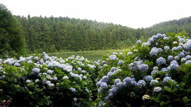 Açores REDUC-20190816_120840