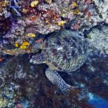TORTUE BUNAKEN_photomizer