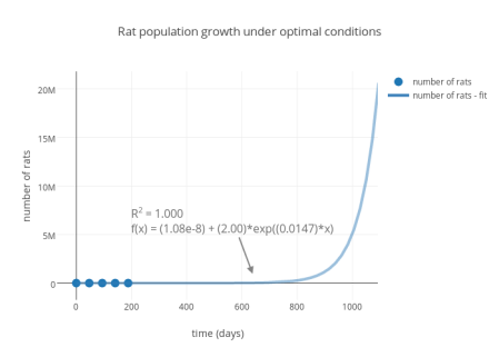 Rat population growth under optimal conditions