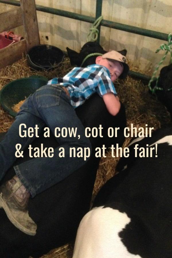 take a nap on a cow