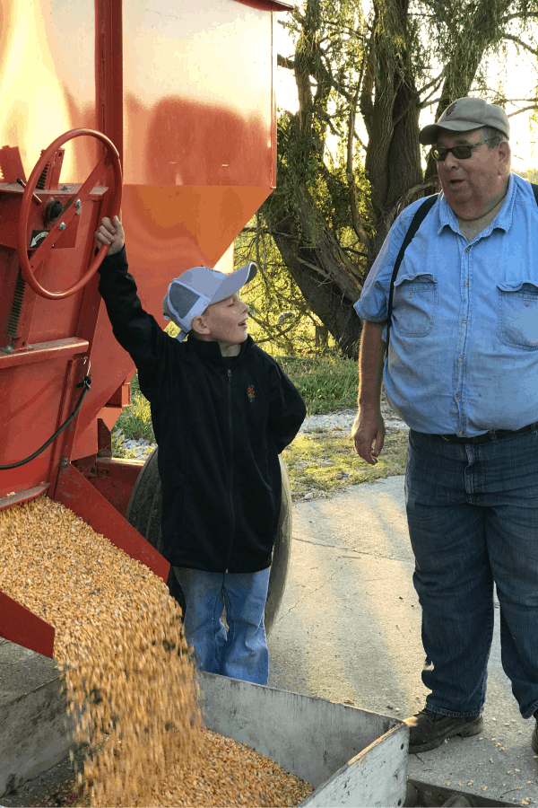unloading first corn harvested of the year