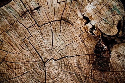 wood texture.jpg