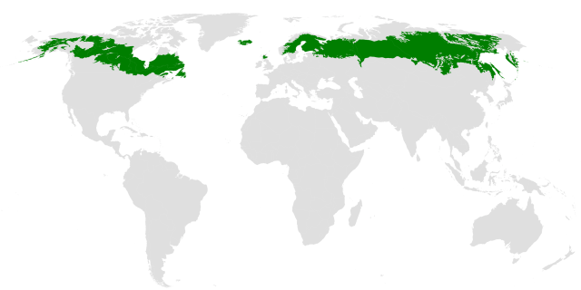 map of the world showing the boreal forest area spread across the top parts of NA and Eurasis