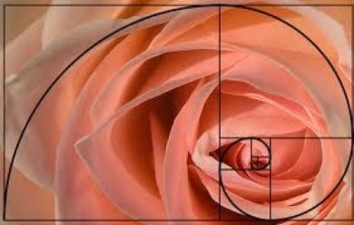 The Golden Mean informs many of nature's proportions.