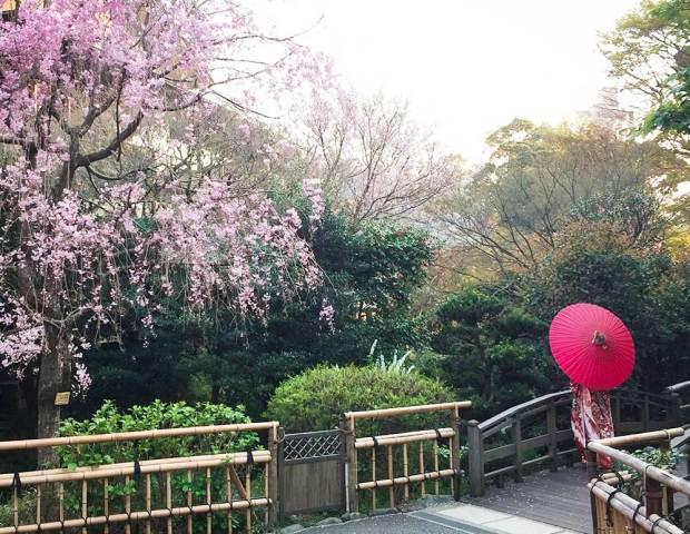 椿山荘でお花見