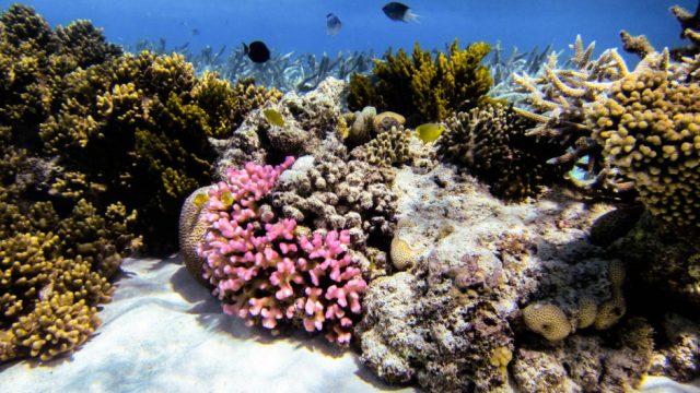 corales-isla-lagartija