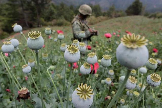 soldados opio