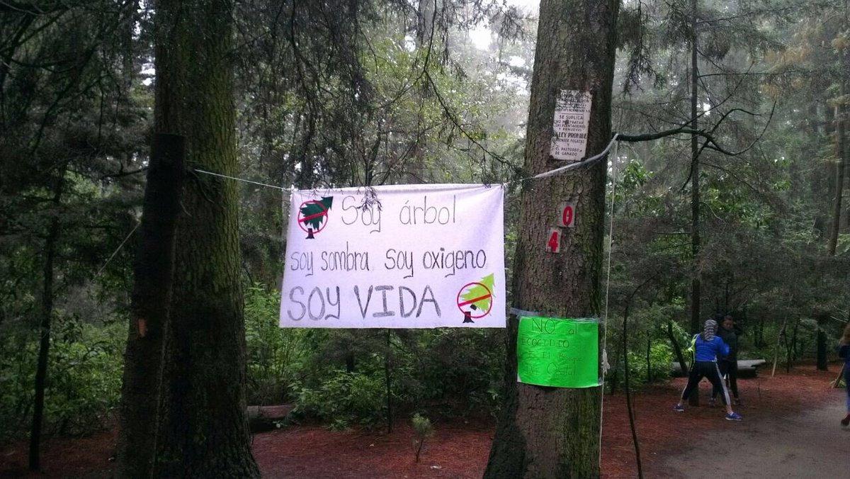 bosque, ocotal, mancera, bosque ocotal, medio ambiente, vecinos ocotal