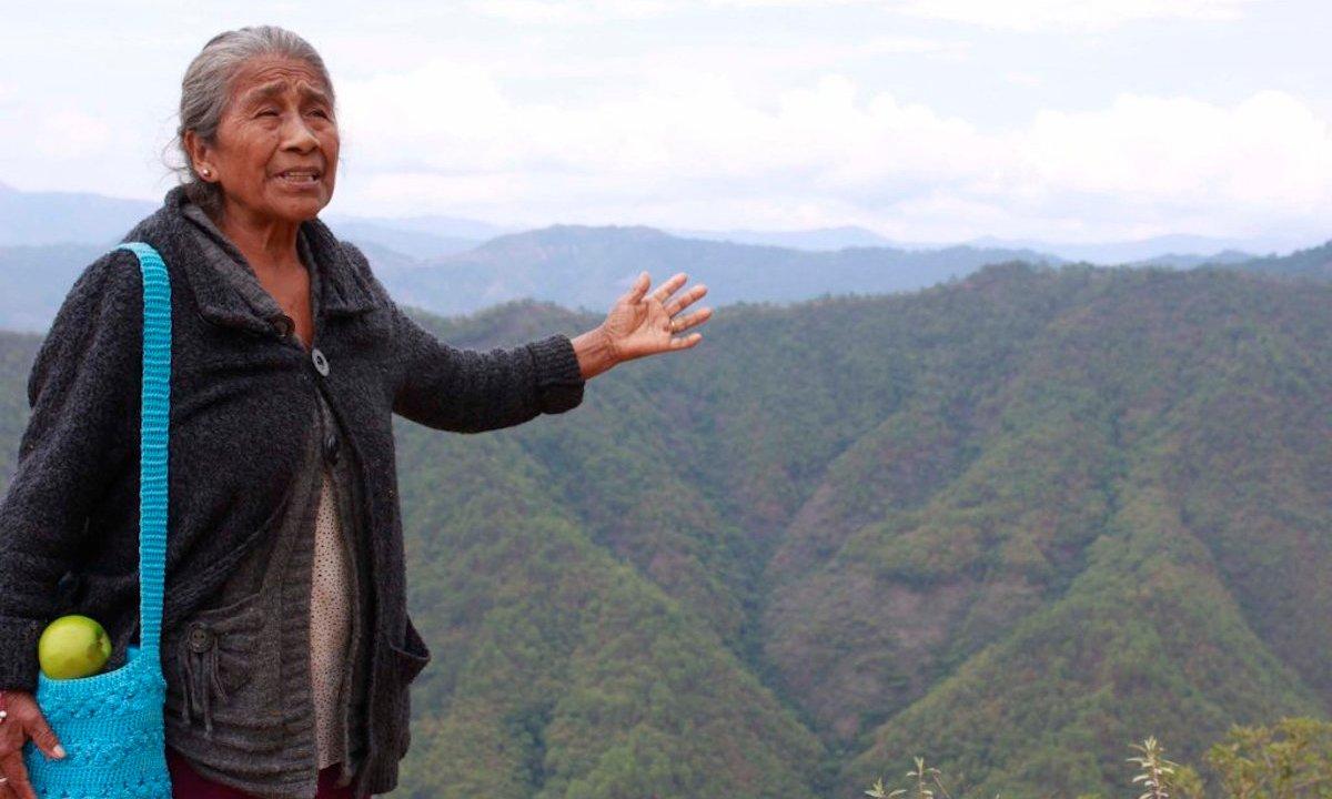 ley biodiversidad, biodiversidad mexico, partido verde, ley verde, territorio indígena