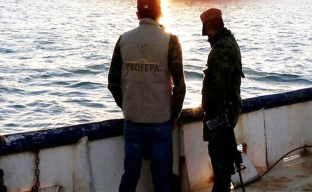 pesca ilegal de totoaba