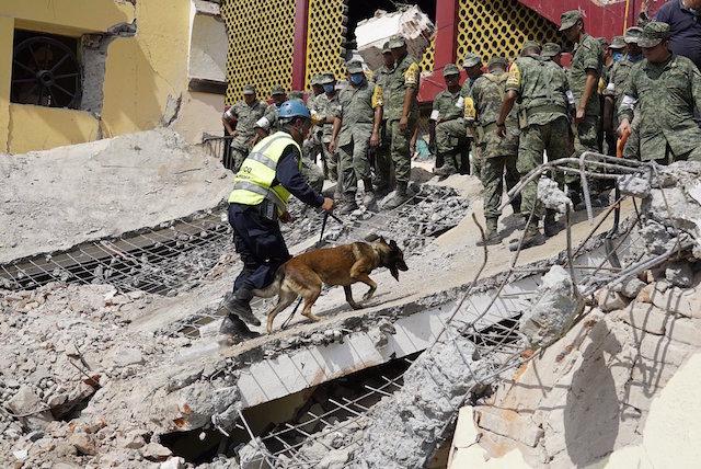 Sismo perros de rescate