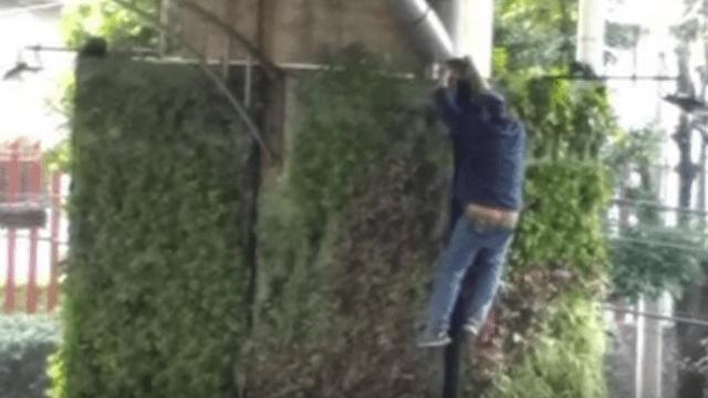 Ratero Araña: detienen sujeto que escaló 7 metros para robar cable