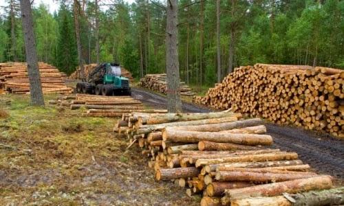 Partido Verde frena discusión de Ley General de Biodiversidad
