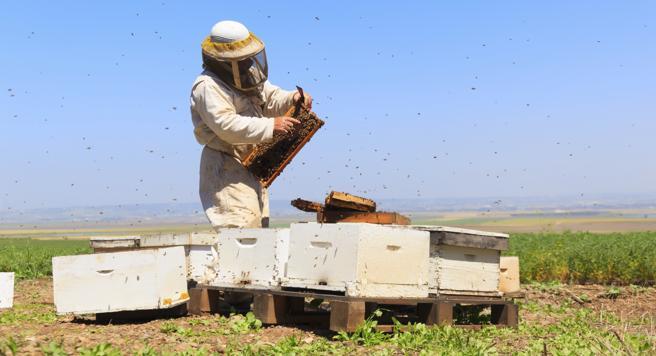 Unión Europea prohibe pesticidas que dañan a abejas