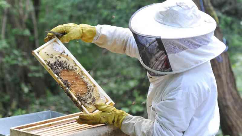 No, no es chiste: se están robando abejas en EEUU