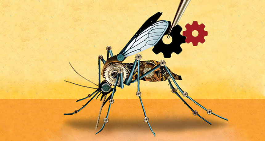 Mosquitos modificados podrían salvar a millones de la malaria