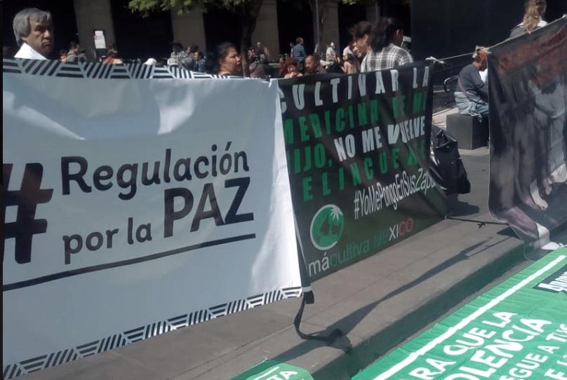 SCJN dicta jurisprudencia: sí o sí habrá marihuana legal